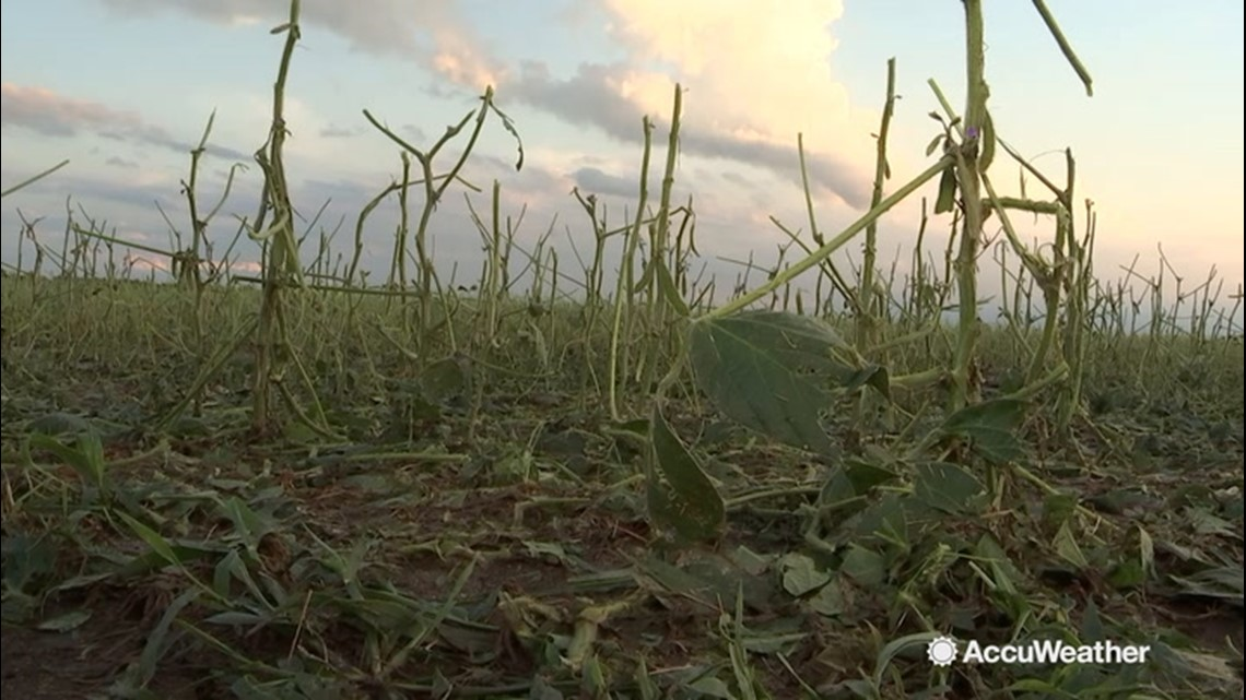 Long-duration hail event damages crops in southern Lower Peninsula of  Michigan