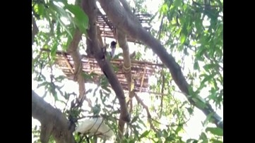 People take to trees to quarantine for two weeks