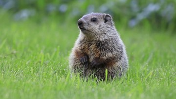 Do groundhogs get cold?
