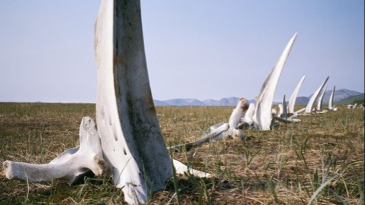 Visit Siberia's Version of Stonehenge Called 'Whale Bone Alley'