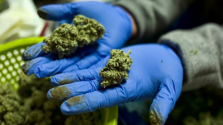 Marijuana Legalization Congress