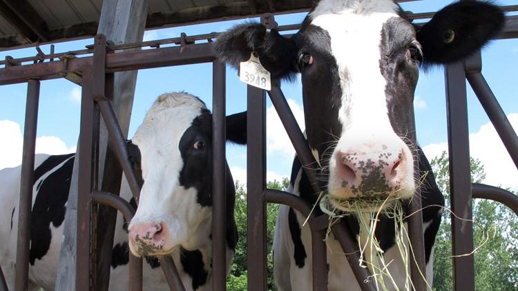 Extreme heat impacting Idaho dairies