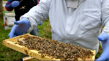 Last winter saw more honeybees die off than ever before, survey reveals