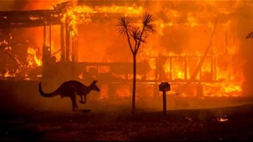 San Diego Zoo and Safari Park to donate Sunday's admissions fees to Australian bushfire relief efforts