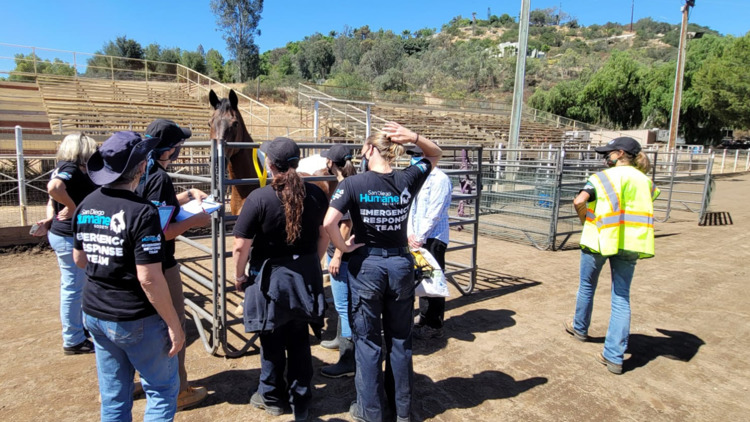 Old MacDonald had a farm, and the San Diego Humane Society wants to save every animal on it