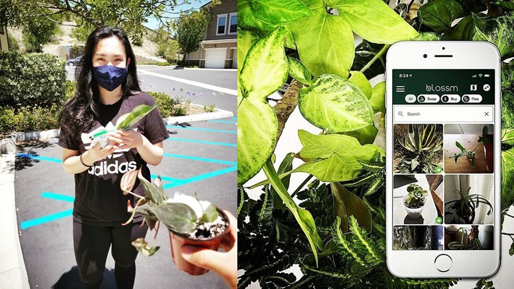 Ocean Beach surfers sprout new friendships with plant swap app