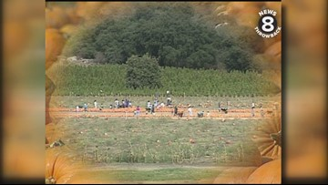 Bate's Nut Farm's Halloween pumpkin patch in North County San Diego with Larry Himmel in 1992