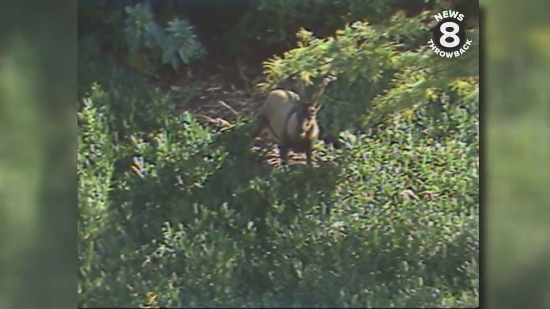 News 8 Throwback Animal Memories From The World Famous San Diego Zoo Cbs8 Com