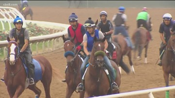 Controversy over the future of horse racing