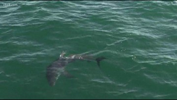Groovin' with Garegnani: Snorkeling with sharks in San Diego