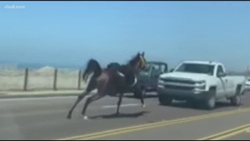 Runaway horse spotted on Highway 101 near Del Mar, ends up in Encinitas
