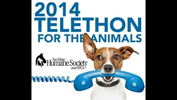 San Diego Humane Society Telethon for the Animals | cbs8 com