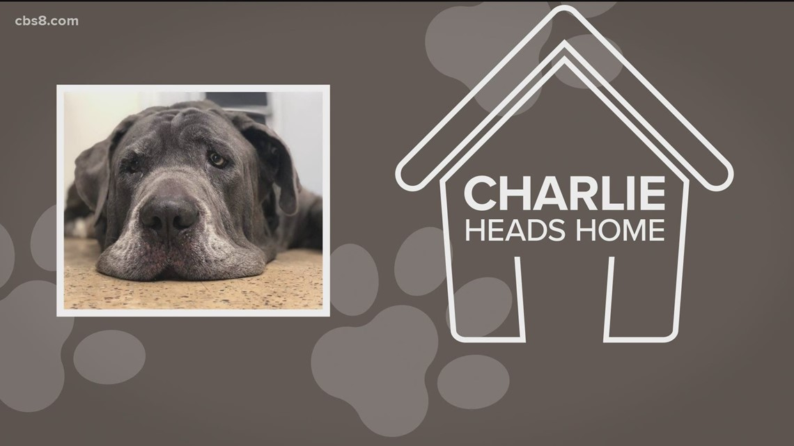 Follow up: Charlie the shelter dog adopted by long-lost caregiver