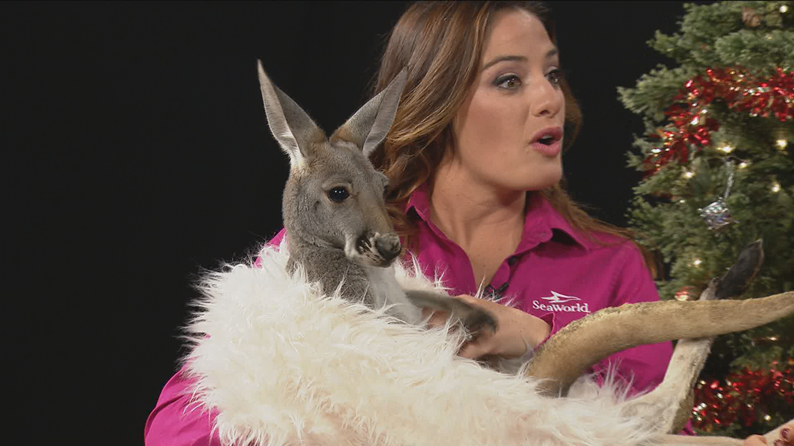 SeaWorld's Christmas celebration features new shows and adorable animals | cbs8.com