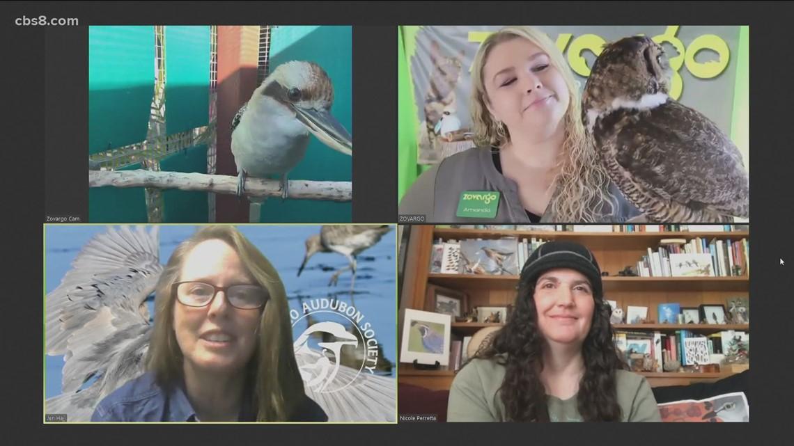 San Diego Bird Festival takes flight this week