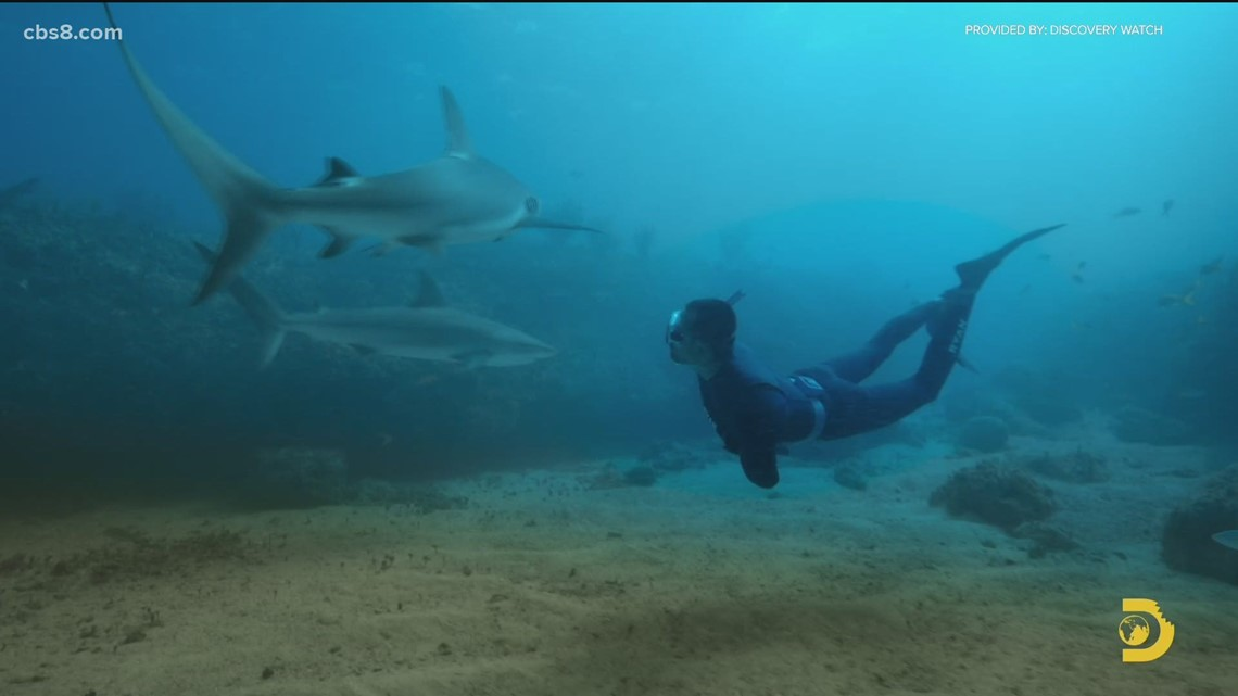 Previewing Shark Academy which premieres July 11