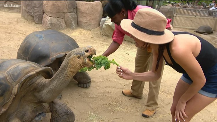 Out and About: San Diego Zoo