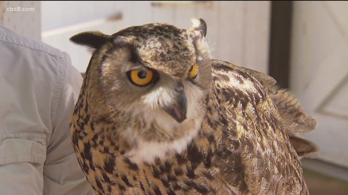 A great horned owl nest excites an avian specialist