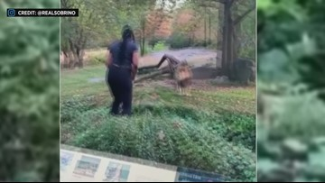 Woman climbs over fence at Bronx Zoo's lion exhibit