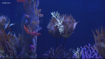 Seahorse and Seadragon exhibit to open at The Birch Aquarium at Scripps