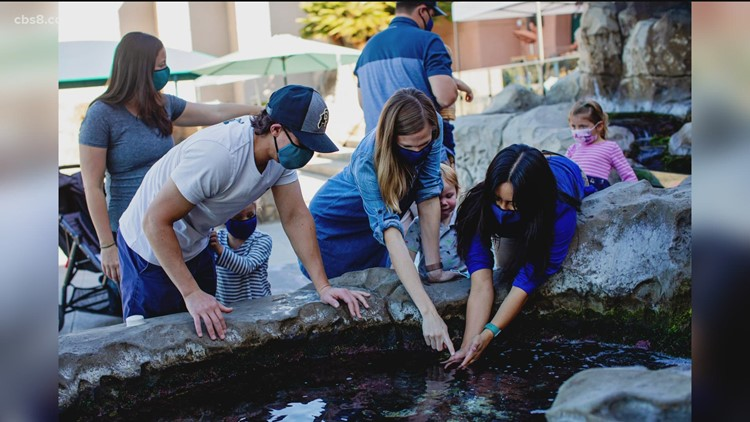 Birch Aquarium reopens this weekend after months-long COVID closure