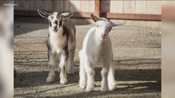 Helen Woodward Animal Center still open for adoptions