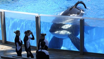 SeaWorld prepares defense in class action lawsuit over 'Blackfish' impact