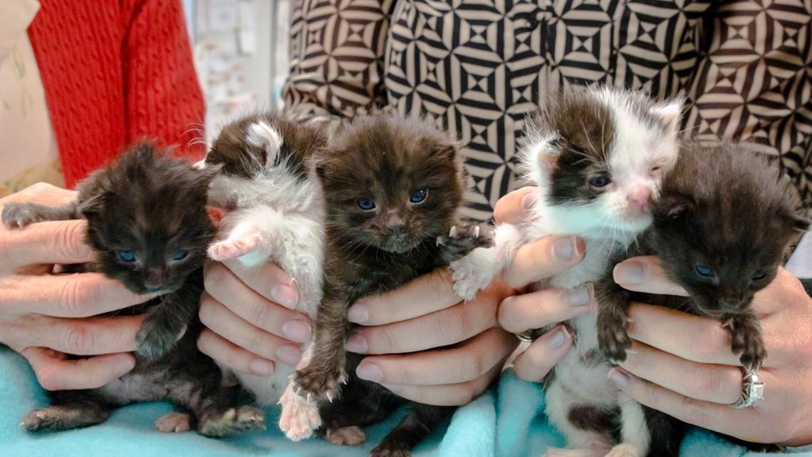San Diego Humane Society Receives 5 Kittens Found In 60