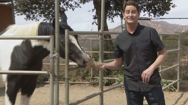 Horses with a special gift helping children with special needs