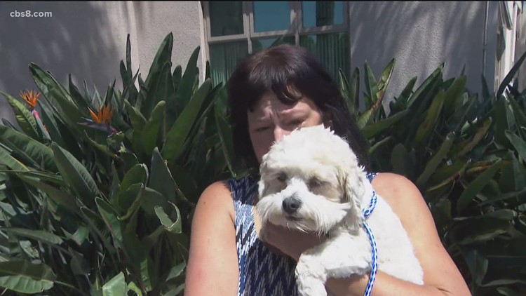 San Diego Humane Society reports more than 90 strays recovered following Fourth of July