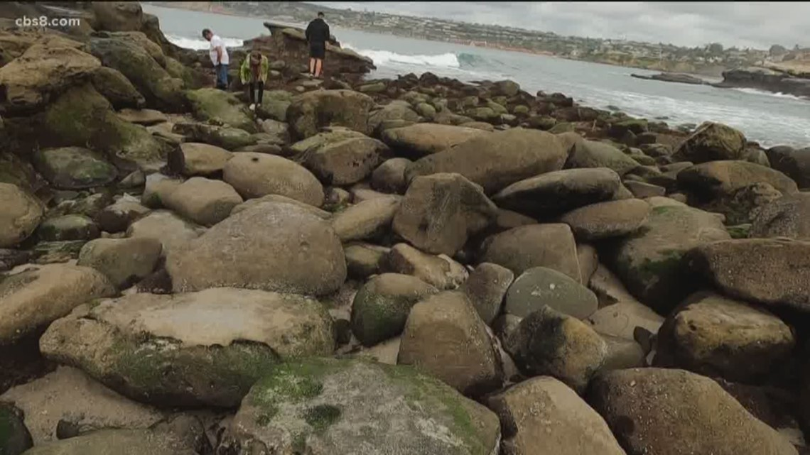 Low tides are creating amazing tide pools in La Jolla