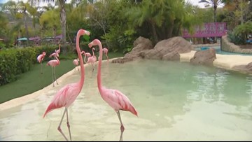 Ashley gets preened by a flamingo