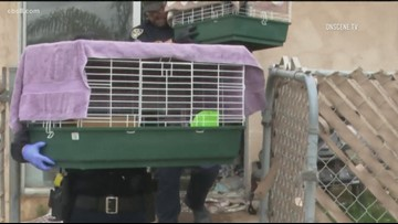 San Diego Humane Society rescues 18 animals after fire tears through Imperial Beach home