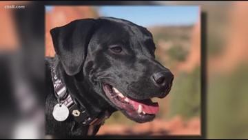 #FindOBI: Search for San Diego couple's dog after deadly Arizona crash