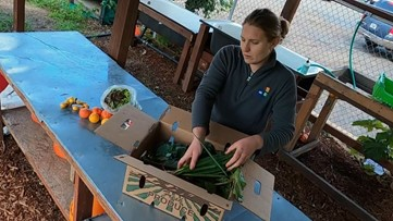 Free 'Garden Boxes' available to families who can't afford groceries