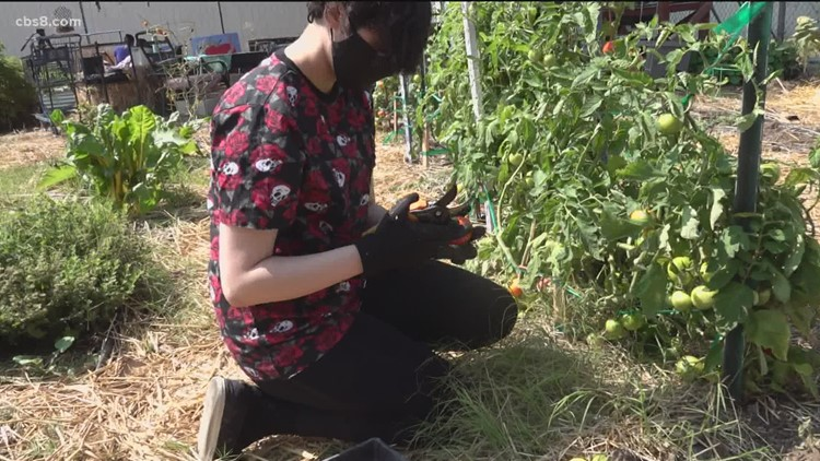 Chula Vista High School students use gardening to transition back to the classroom