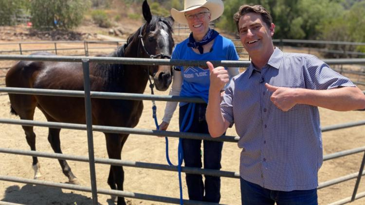 How a harp is helping horses heal in Escondido