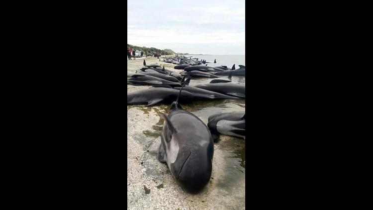 New-Zealand-Whales.jpg