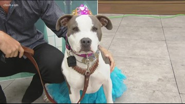 A Furry Tail Ending: Helen Woodward Animal Center celebrates puppy prom
