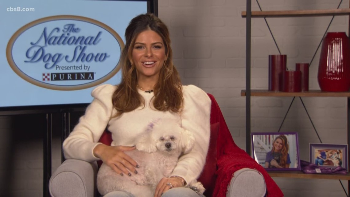 Maria Menounos talks about the National Dog Show