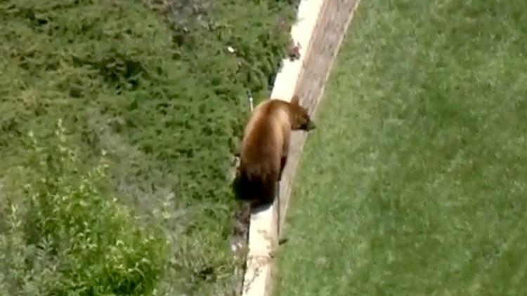 Bears roaming LA County neighborhood