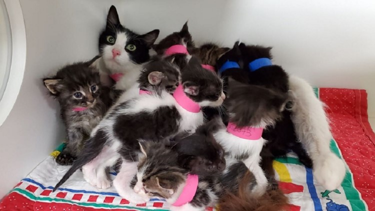 San Diego Humane Society celebrates International Cat Day with a Super Mom