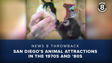 News 8 Throwback: San Diego's animal attractions in the 1970s and '80s