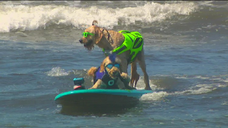Pups hit the water for the Surf Dog Surf-a-Thon in Del Mar