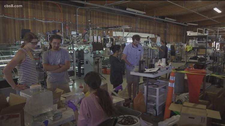 Inside the Scripps Institution of Oceanography SURF program
