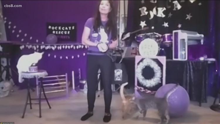 Amazing Acro-Cats auction