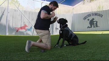 Dog Tags: Service dog changes Navy vet's life for the better