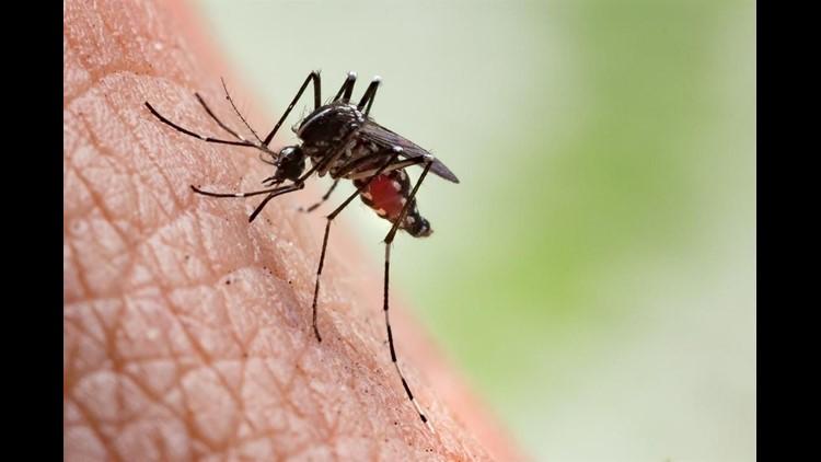 Mosquitoes - thinkstock