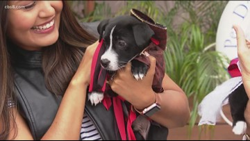 Hornblower Cruises hosting Pirate-and-Mermaid Themed Pet Day supporting Helen Woodward Animal Center