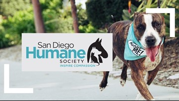 San Diego Humane Society receives matching $50K gift to help in April